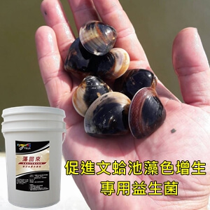 Promote the growth of Mussel