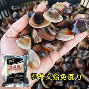 symlong-文蛤-多益菌