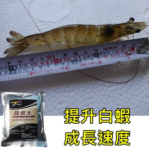 symlong-白蝦-貝倍大